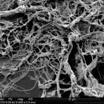 SEM image of WEIDMANN microfibrillated cellulose WMFC Q_eco