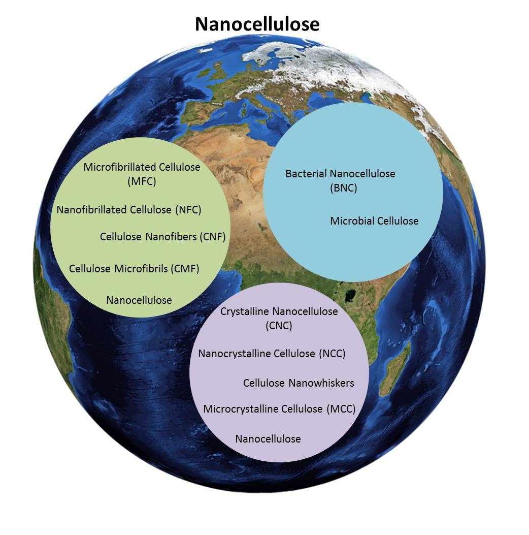 World of Nanocellulose